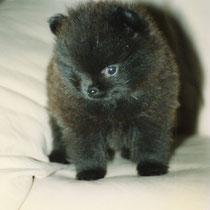 Nero - der kleine Bär