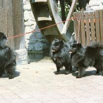 Wolfi in der Mitte und seine zwei wunderschönen Schwestern.