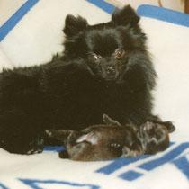 Daily und ihr erster Welpe Miggeli vom Pommerle