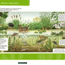 Pflanzen und Tiere im See