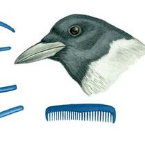 Vogelschnabel als Werkzeug