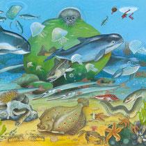 Das Meer: Die Ostsee
