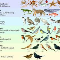 Arten