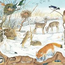 Feld und Wiese: Im Winter