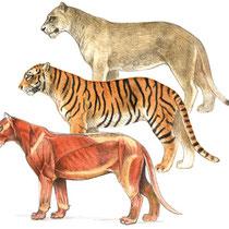 Löwe und Tiger