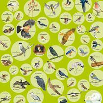 Vögel, Zweitverwertung