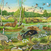 Bach und Teich: Im Moor