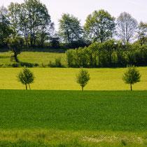 Landschaft grüne Wiese mit Bäumen und Himme grün