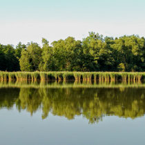 Spiegelung am See mit Bäumen in Tambach