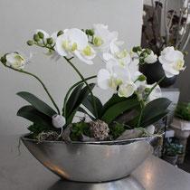 Schale Orchidee