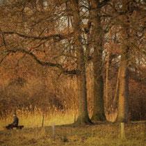 Ralf Ehben: Mann unter Baumgruppe