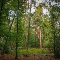 Roland Zschornack: Wald