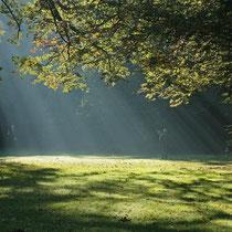 Elke Riesmeier: Waldspaziergang