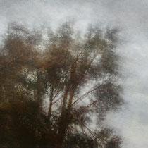 Vent dans les arbres - acrylique sur bois - 40x61 cm - 2009 - M - Pavlïn