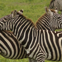 Tansania, Dezember 2011 © Robert Hansen