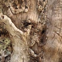 Manifestierte, sichtbare Kraft der Baumbegleiter