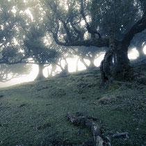 Fanal | Madeira | Portugal