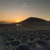 Vineyard | Lanzarote | Spain