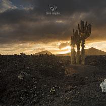 Los Volcanes Natural Parc | Lanzarote | Spain