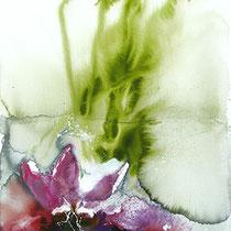 Blüte im Teich