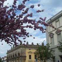 Frühling in der Lindenstraße