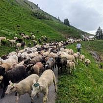 BRM 400 HELLS RIDGE+: In den Schweizer Alpen gibt es noch Begegnungen der besonderen Art