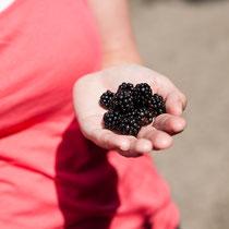 NSG Boberger Niederung - Früchte der Natur