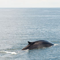 Whale Watching, Cape Cod, Provincetown