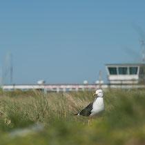 Fluggerät vor dem Flughafen auf der Düne Helgolands