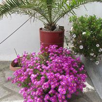 Man liebt Blumen