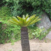 Sich streckende Palme