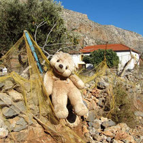 Teddybärenhasser und -liebhaber?