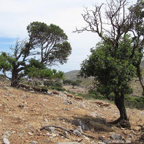 Wenig Bäume