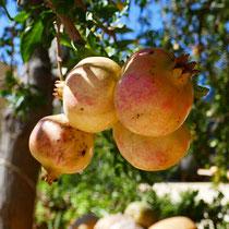 ... Früchte