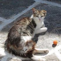 Chora-Katze