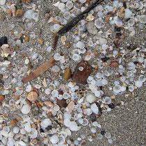 Muschelsand