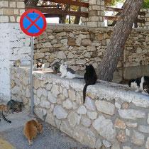 Und noch mehr Katzen
