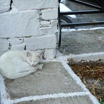 Katze in Tarnfarbe