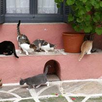 Katzenleben in Chalki