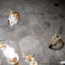 Bettelnde Katzen