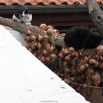 Mögen Katzen Zwiebeln?