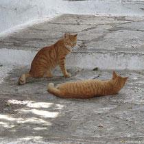 Katzensdasein in der Chora