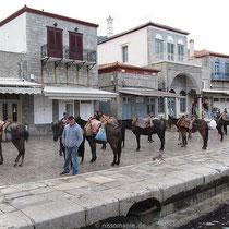 Die Muli-Parade...
