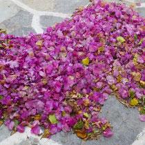 ... und andere Blüten