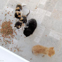 Kleine Katzen