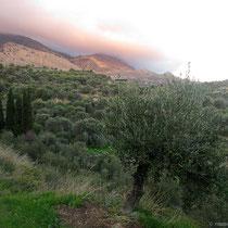 Wunderschöne Oliven