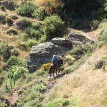Einsamer Eselsreiter auf dem Weg auf die Felder