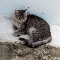 In meinem nächsten Leben werde ich Katze in Emborio