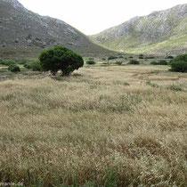 Felder bei Achodea