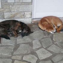 Selten zuvor so viele schlafende Hunde gesehen